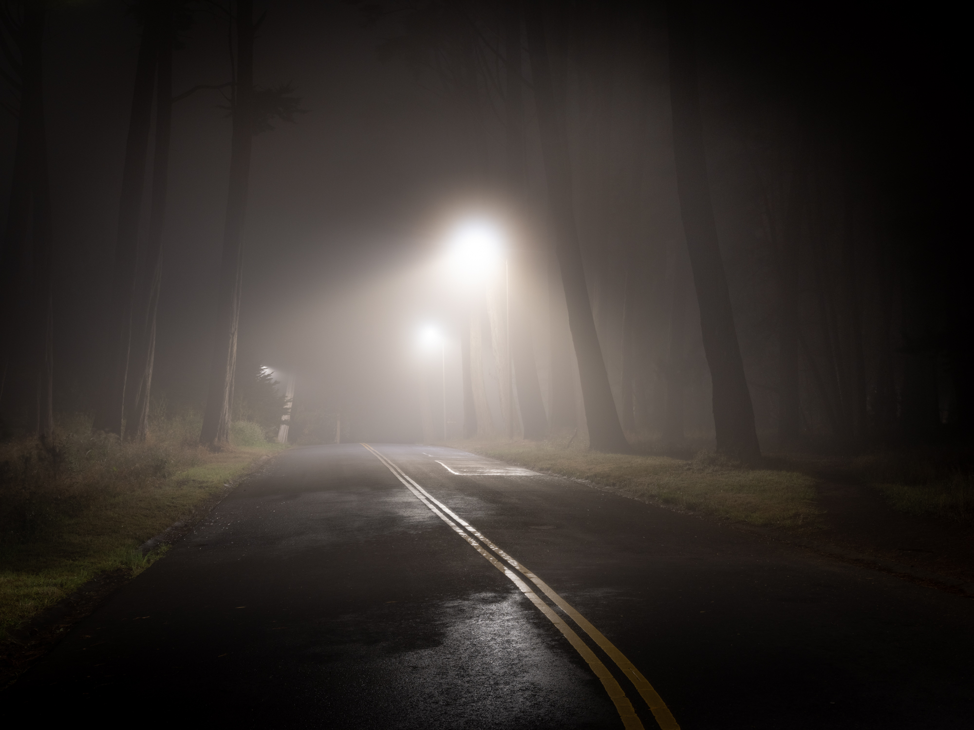 Road of trees and fog at night.