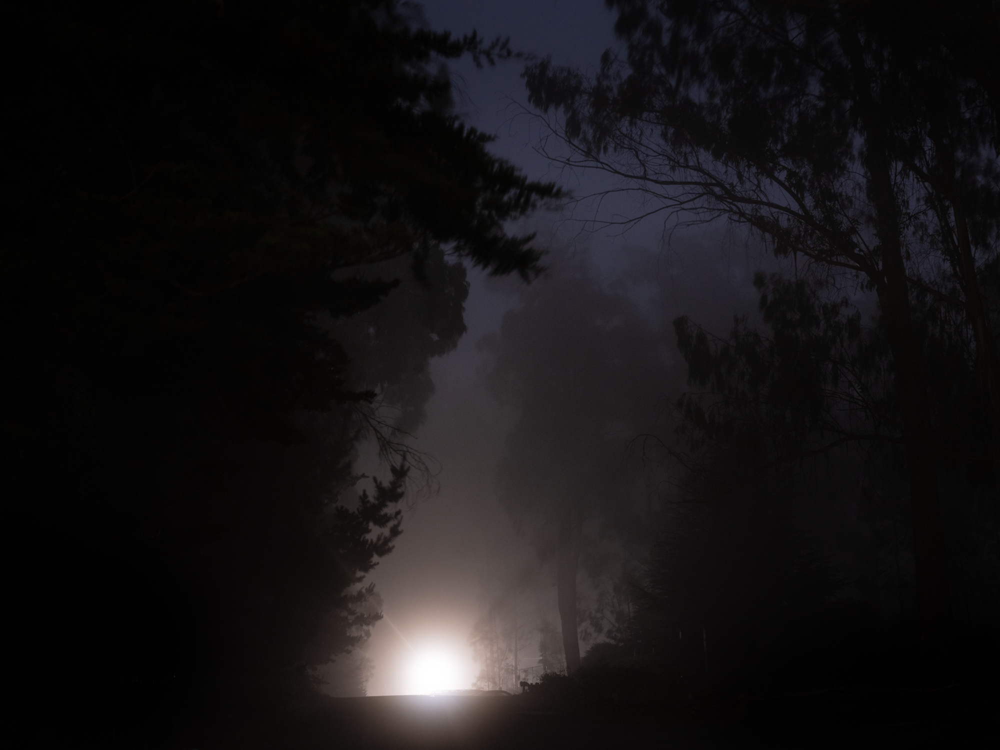 Light in background between trees at night.