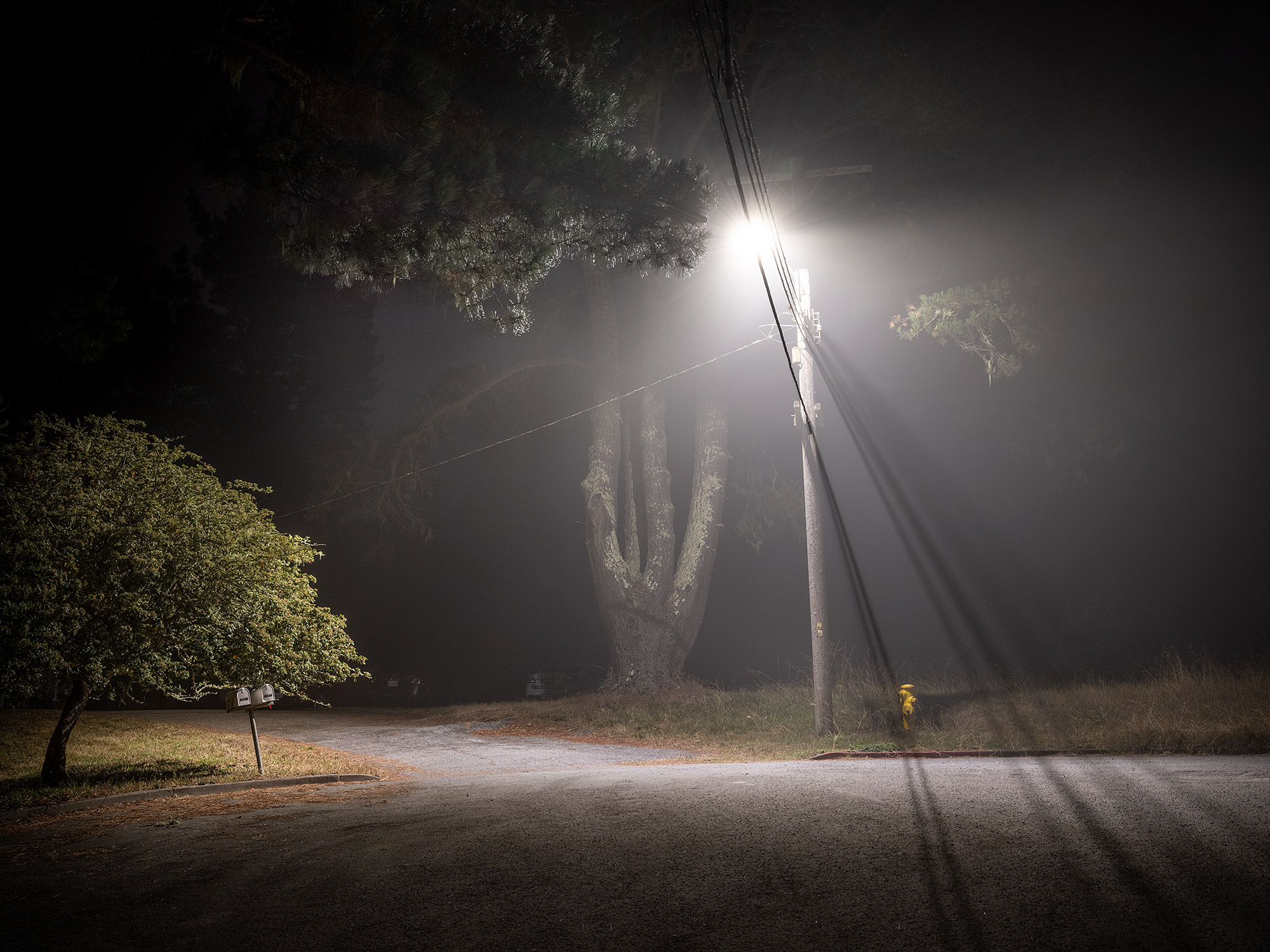 Street image of light and tree.