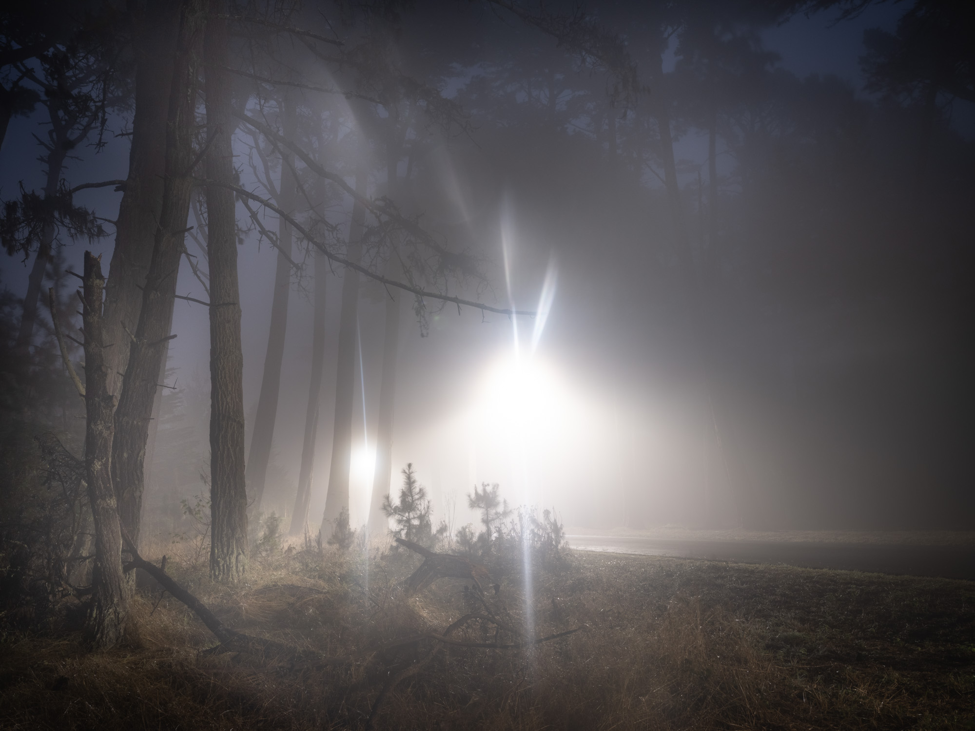 Light behind trees with light source.