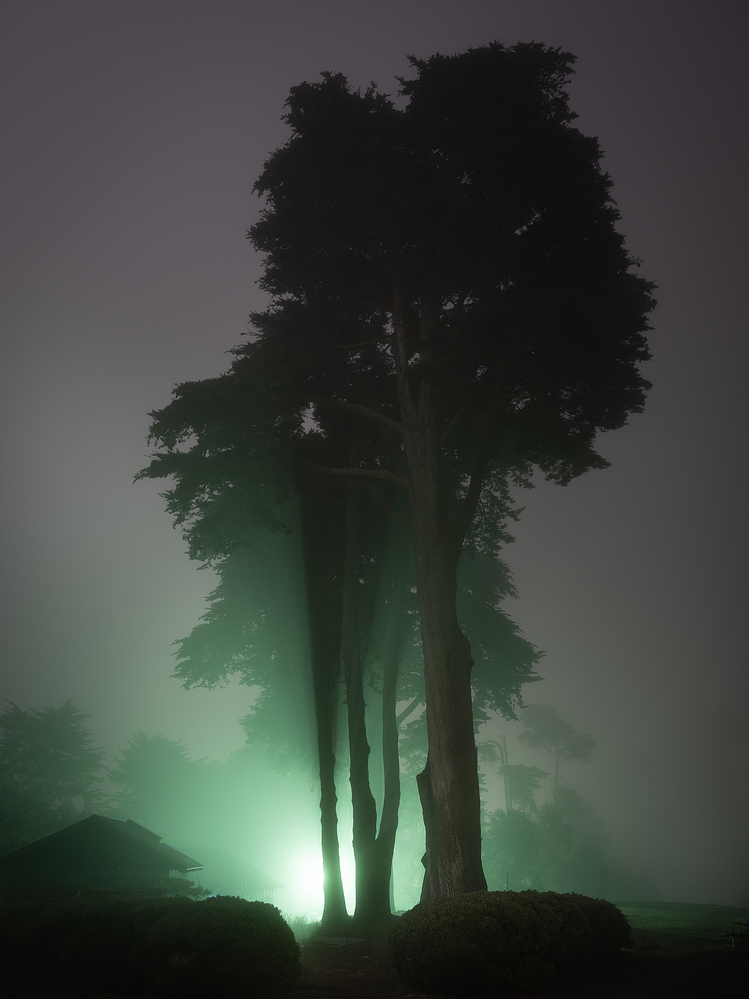 Trees at night with light in the background on a golf course.