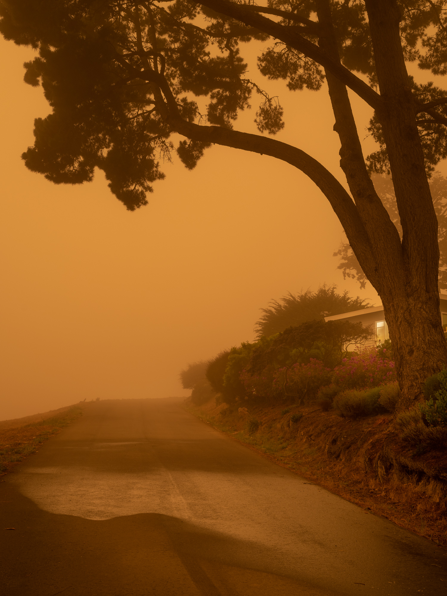 Orange skies during the day brought on by the fires in California.